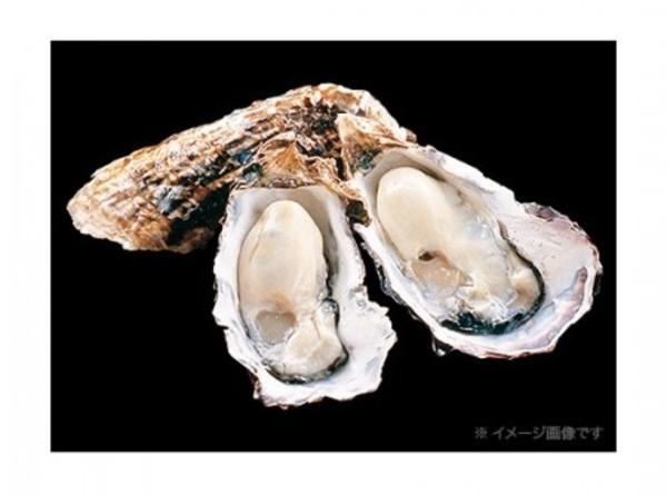 広島産 生食用殻付き牡蠣 8個入