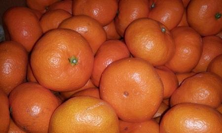 【1月特選素材】国産果物 広島県安芸津産 熟成みかん 2,5Kg 旬の果物 送料込み企画 同梱可能