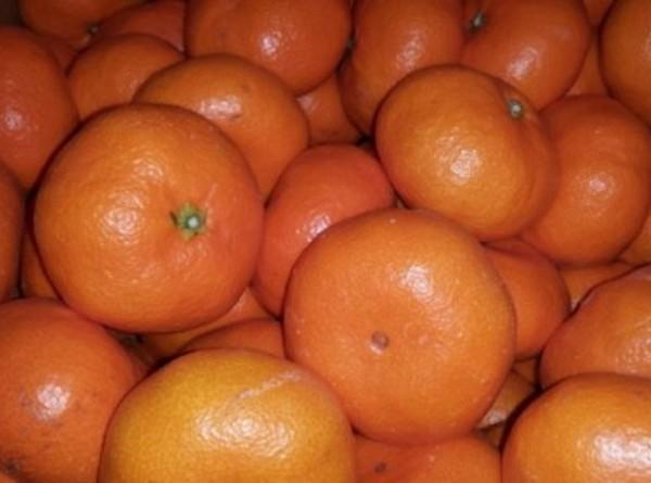 【送料込み企画】国産 広島県安芸津産 熟成みかん 5Kg 1月が旬の果物 国産フルーツ 追熟 柑橘